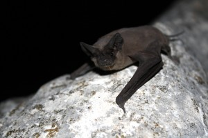 Image of bat latched onto a tree